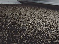 dried sludge by HUBER Middle Temperature Dryer BT+